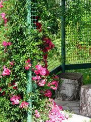 Садовые решетки для возведения шпалер,  пергол,  беседок