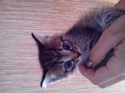Отдам котенка в хорошие руки